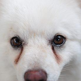 Prevent tear stains on pets