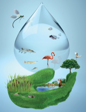 water pollution,